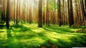 beautiful_forest_scenery-wallpaper-1366x768