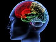 Brain_Logic