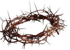 Crown_of_Thorns