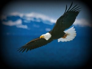 Eagle_Wings_Soaring