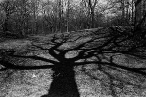 Tree_Shadow