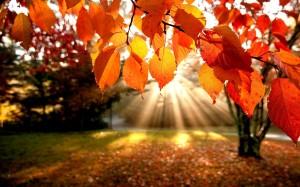 Autumn_Leaves_Falling